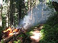 Lightning Fires at Buckhead Mountain-103, Willamette National Forest (34727478062).jpg