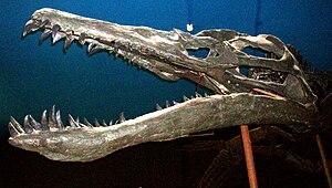 Pliosauroidea - Liopleurodon ferox