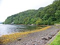 Loch Riddon at Ormidale Lodge - geograph.org.uk - 523963.jpg