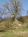 Long disused small quarry - geograph.org.uk - 376791.jpg