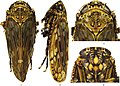 Longicornus brevispinus (10.3897-zookeys.888.34799) Figures 1–4.jpg