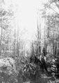 Mühsamer Bau eines Schützengrabens im Wald - CH-BAR - 3240108.tif