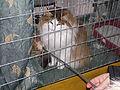 MTP Cat Show 2230036.JPG
