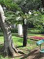 Madeira em Abril de 2011 IMG 1727 (5663185235).jpg