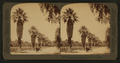 Magnolla Avenue,- tropical beauties of Riverside, California, from Robert N. Dennis collection of stereoscopic views 2.png