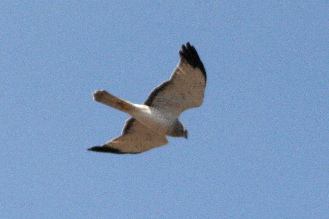 Image Result For Golden Retriever Northern