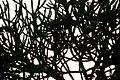 Malha arbórea.JPG