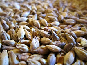 Malt - Malted grain for beer production