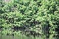 MangrovesVentanilla.JPG
