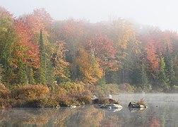 Marshfield Pond October 2021 003.jpg