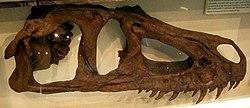 http://upload.wikimedia.org/wikipedia/commons/thumb/7/7d/Marshosaurus.jpg/250px-Marshosaurus.jpg