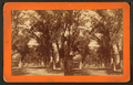 Mason Street, Savannah, Ga, by Ryan, D. J., 1837-.png