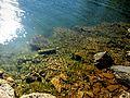 Mavrovo Lake 40.jpg