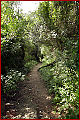 Mediterranean Steps wooded path.jpg