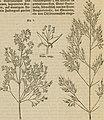 Meyers Konversations-Lexikon - eine Encyklopädie des allgemeinen Wissens (1890) (14592422278).jpg