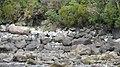 Milford Sound, South Island - panoramio (4).jpg