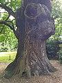 Minchenden Oak Garden, Southgate, London N14 20170804 105019 (32853782157).jpg