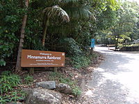 MinnamurraRainforest.jpg
