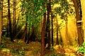 Mis primeros pinitos ,^^la selva^ - panoramio.jpg