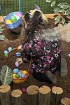 Misawa children enjoy an excellent egg'stravaganza 120408-F-BW907-030.jpg