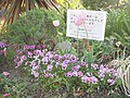 Mitaka library flower bed (27733070528).jpg