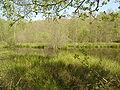 Moehlin Breitsee 2.JPG