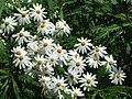 Monte Palace Tropical Garden DSCF0172 (4643148262).jpg