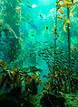 Monterey Aquarium II (19957755685).jpg