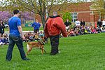 Month of Military Child MWD demonstration 150414-F-OH119-223.jpg