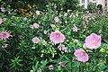 Moscow, flowers in Shirokaya Street (31162514350).jpg