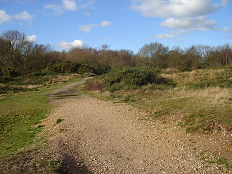 Mousehold Heath - Heathland