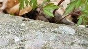 File:Myra på en gren.webm