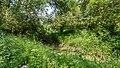 NSG Rurauenwald-Indemuendung FFH-Gebiet Indemündung Feuchtgebiet in Ufernaehe I.jpg
