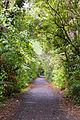 NZ150415 Waipoua Forest 01.jpg