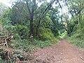 Nairobi Arboretum Park 26.JPG