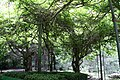 National Botanic Garden,Dublin,Ireland - panoramio (22).jpg