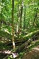 Nationalpar Müritz - Waldstück bei Federow (1).jpg