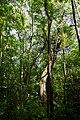 Nationalpark Donau-Auen Lobau Fasangarten Mai 2016 01.jpg
