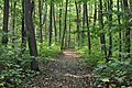 Nationalpark Hainich (5).jpg