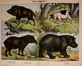 Natural history of the animal kingdom for the use of young people (Plate XVII) (5974372385).jpg