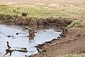 Nature of Ngorongoro Conservation Area (106).jpg