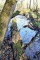 Naturschutzgebiet Haseder Busch - Nebengewässer (2).jpg