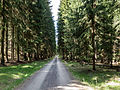 Naturschutzgebiet Nr. 176 Uhlstädter Heide 2 WDPA ID 14502 Sublocation DE-TH.jpg