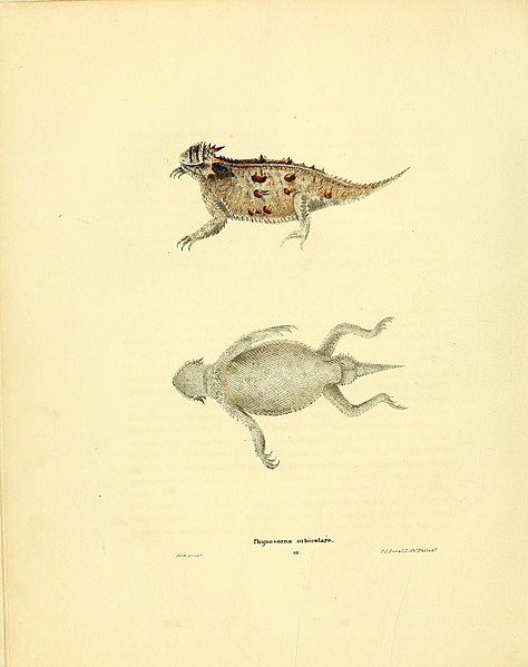 File:North American herpetology, or, A description of the reptiles inhabiting the United States (6076444310).jpg