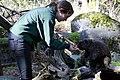 Northwest Trek staffer feeding porcupine. (0914b6f082aa42e3a5212f57b3787306).jpg
