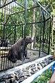 Novosibirsk Zoo - panoramio (5).jpg