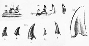 Nuthetes - Portions of the holotype mandible and close up of a tooth