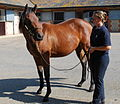 Oasis Dream - Ffestiniog yearling filly (New Fforest) (6113719310).jpg