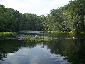 Silver Springs State Park - The Silver River from within the park.