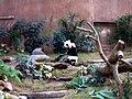 Ocean Park panda 3.jpg